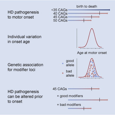 an analysis of the characteristics of huntingtons disease an inherited neurodegenerative disorder Thalassaemia is a blood related genetic disorder which involves the absence of or errors in genes responsible for production of haemoglobin an analysis of the person's stool may reveal decreased or absent levels of the digestive enzymes huntington's disease.