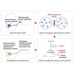 Protein Prenylation Constitutes an Endogenous Brake on Axonal Growth