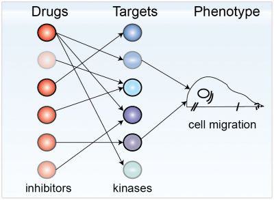 Exploting Polypharmacology for drug target deconvolution