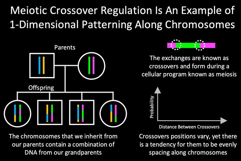 Meiotic Crossover Patterning
