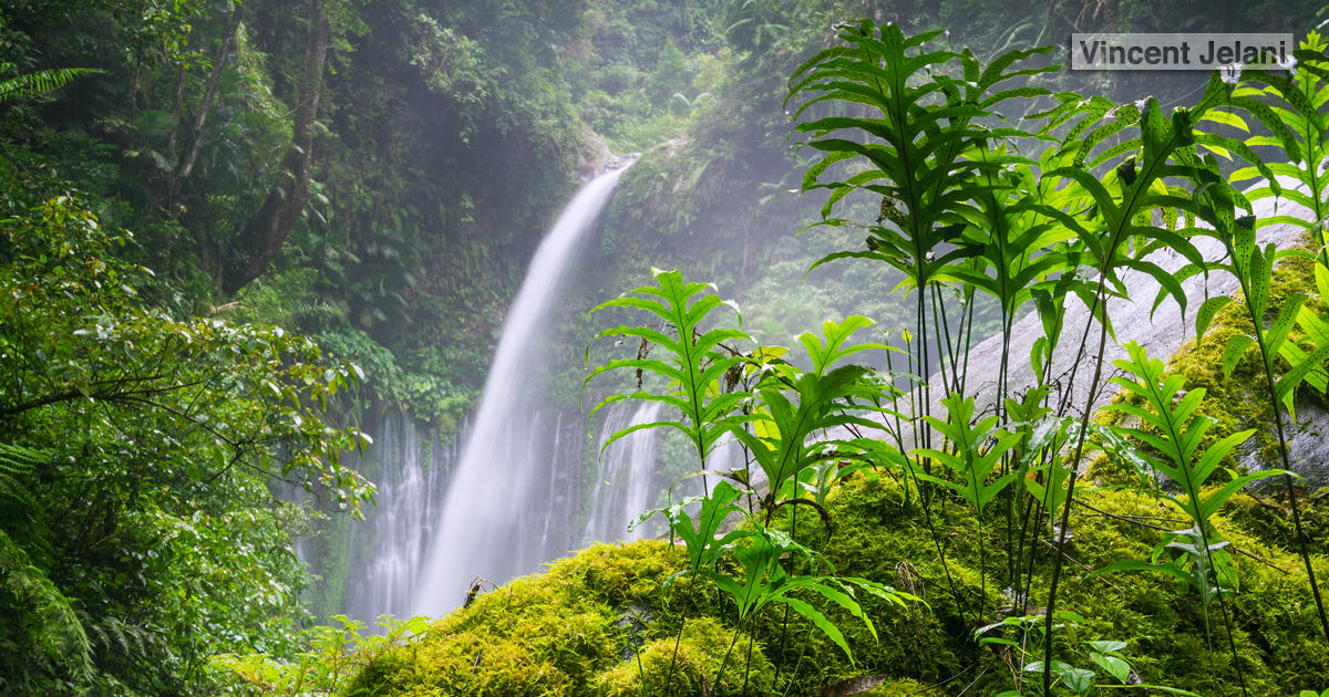 Southeast Asian Rainforests Threatened Agriculture on Rain Forest Ecosystem