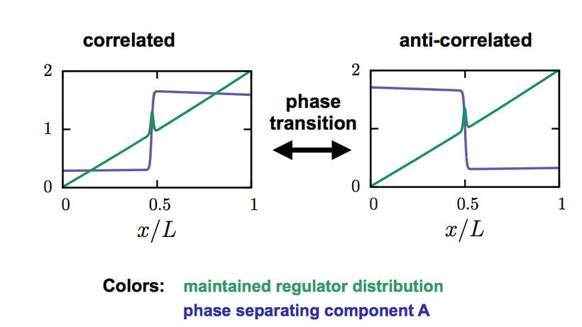 Novel phase transition in phase separating systems