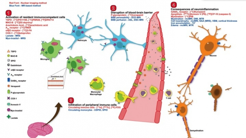 In vivo Imaging of Neuroinflammation