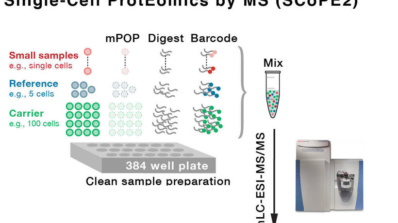 High-throughput single cell proteomics by mass Mass Spectrometry | Slavov Laboratory @ Northeastern University