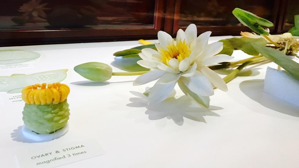 Glass Flowers Exhibit at the Harvard Museum of Natural History